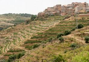 Länder Weinseminare - Spanien Weinseminar - Vuelta por España
