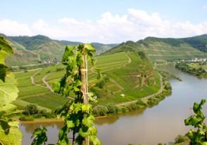 Länder Weinseminare - Deutschland Weinseminar - wieder Weltklasse!