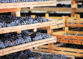 Länder Weinseminare - Amarone & Co. Weinseminar