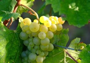 Klassiker Weinseminare - Weißwein Klassiker Weinseminar