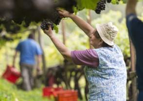 Länder Weinseminare - Südtirol & Trentin Weinseminar
