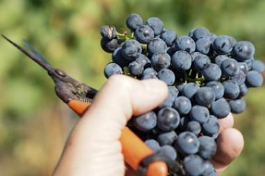 Grundlagen Weinseminar 1 bis 3 zum Paketpreis