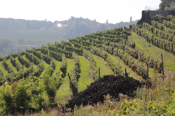 Italien Weinseminar - Barolo, Barbaresco & Co.