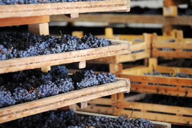 Italien Weinseminar - Amarone & Co.
