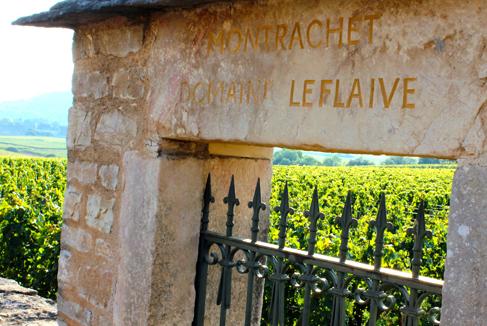 Rebsorten Klassiker Chardonnay Weinseminar