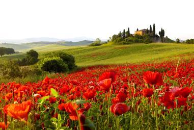 Italien Weinseminar - Brunello, Chianti & Co.