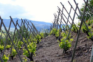 Frankreich Weinseminar - Rhône