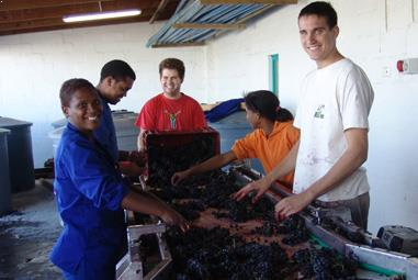 Südafrika Weinseminar - Weinrevolution am Kap